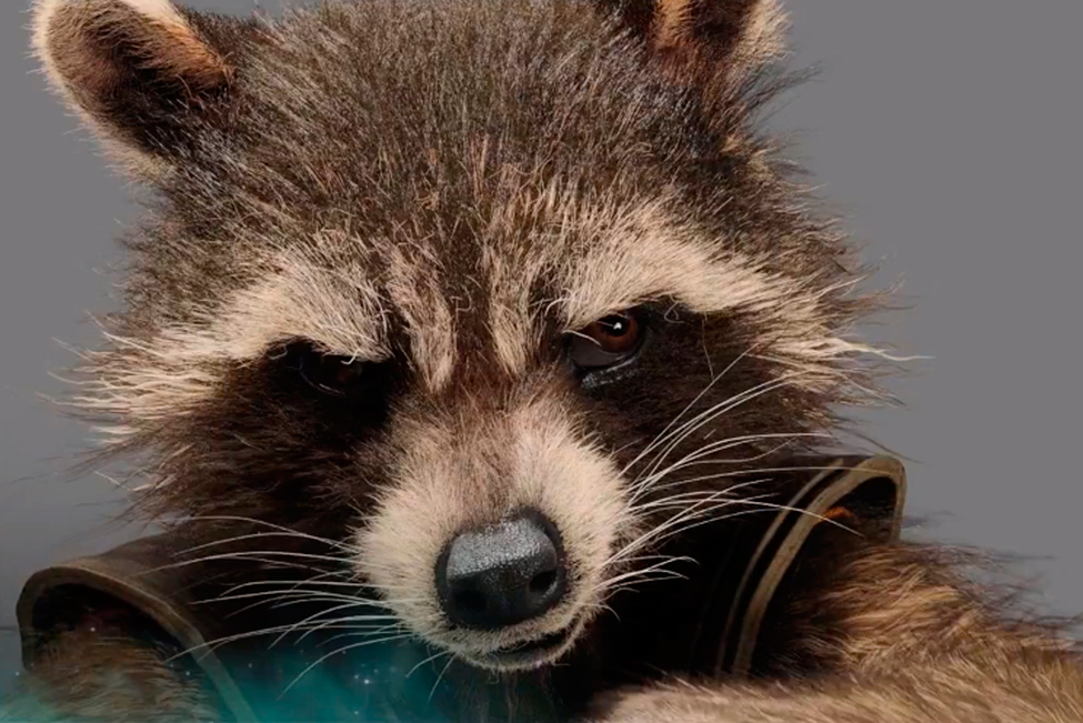 Rocket_Raccoon_ok